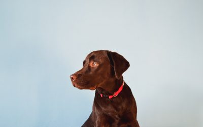 Eco-Friendly Products For Your Dog